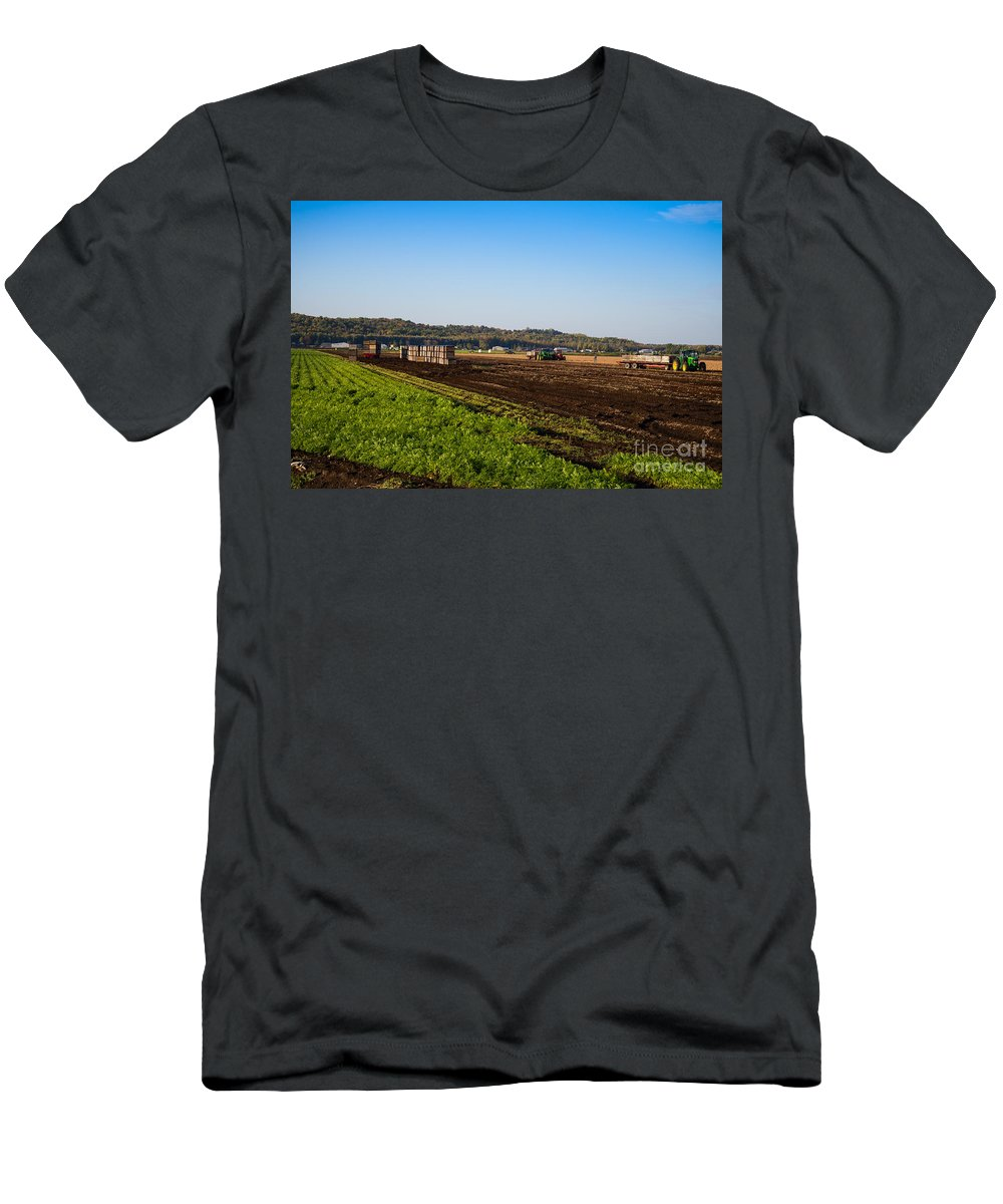 Farm Men's T-Shirt (Athletic Fit) featuring the photograph Harvest Time In Holland Marsh Ontario by Les Palenik