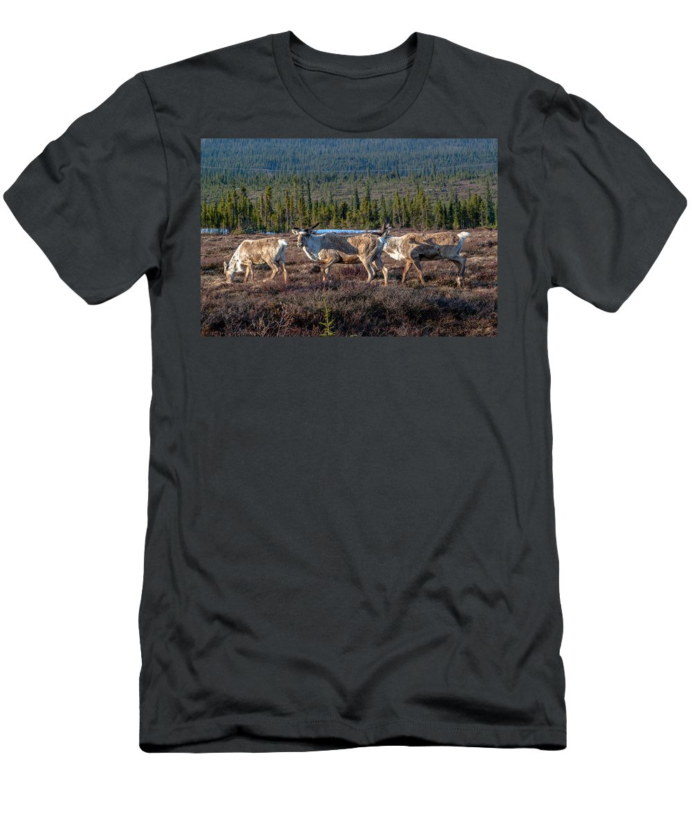 Broad Pass Men's T-Shirt (Athletic Fit) featuring the photograph Herd Of Broad Pass by Thomas Sellberg