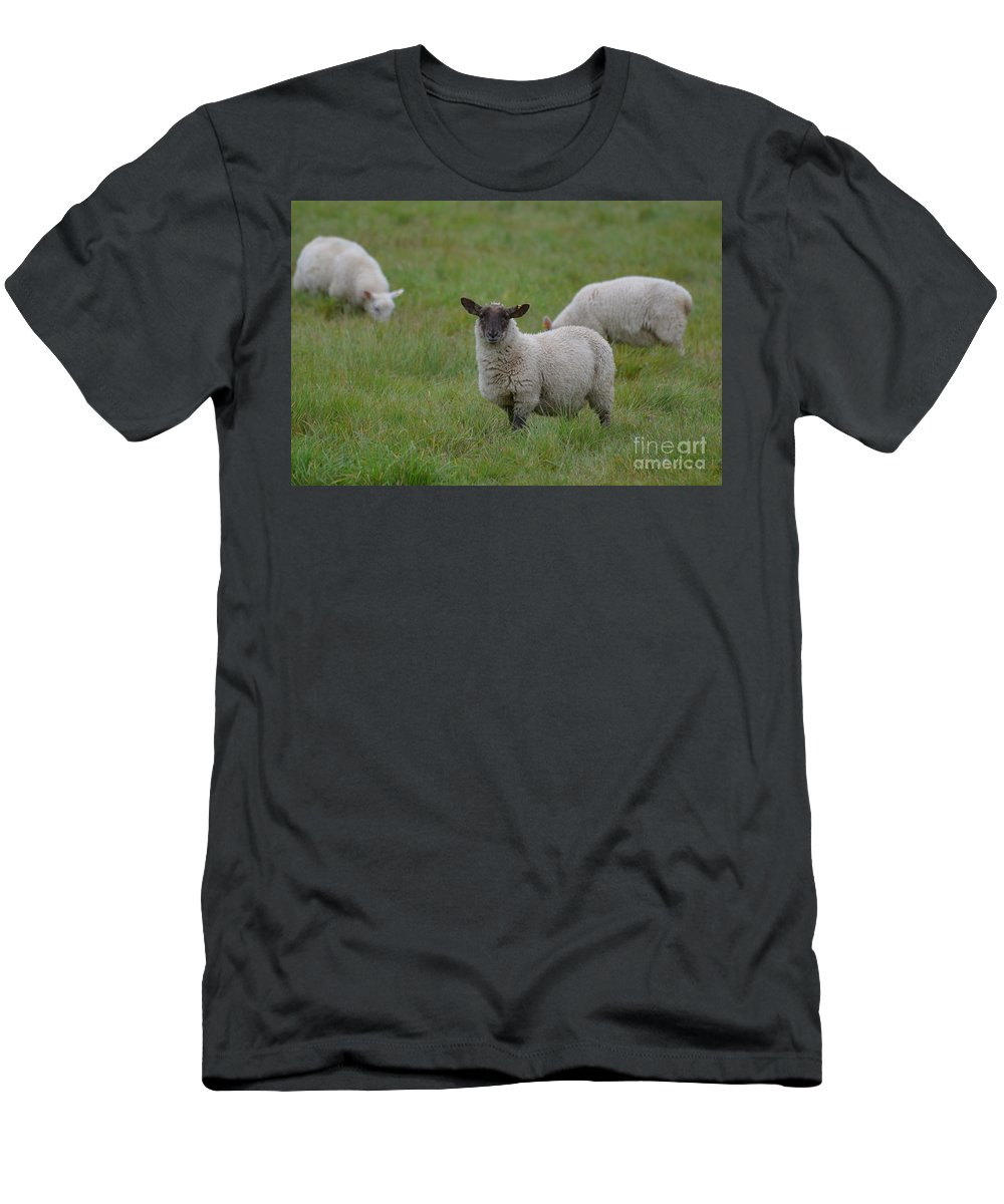 Sheep Men's T-Shirt (Athletic Fit) featuring the photograph Herd Of Sheep by DejaVu Designs