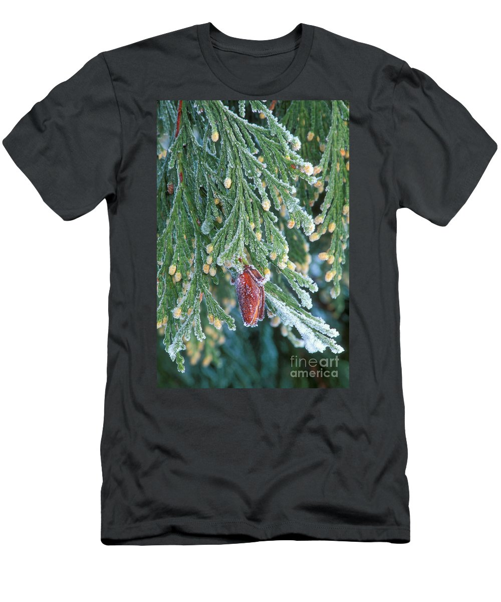 North America Men's T-Shirt (Athletic Fit) featuring the photograph Hoarfrost On Pine Bough Yosemite National Park by Dave Welling