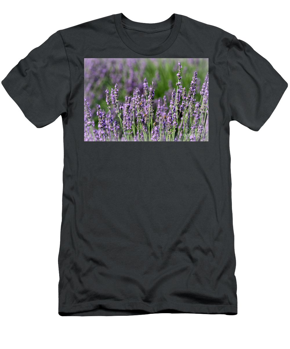 Lavender Men's T-Shirt (Athletic Fit) featuring the photograph Honeybees On Lavender Flowers by Catherine Sherman