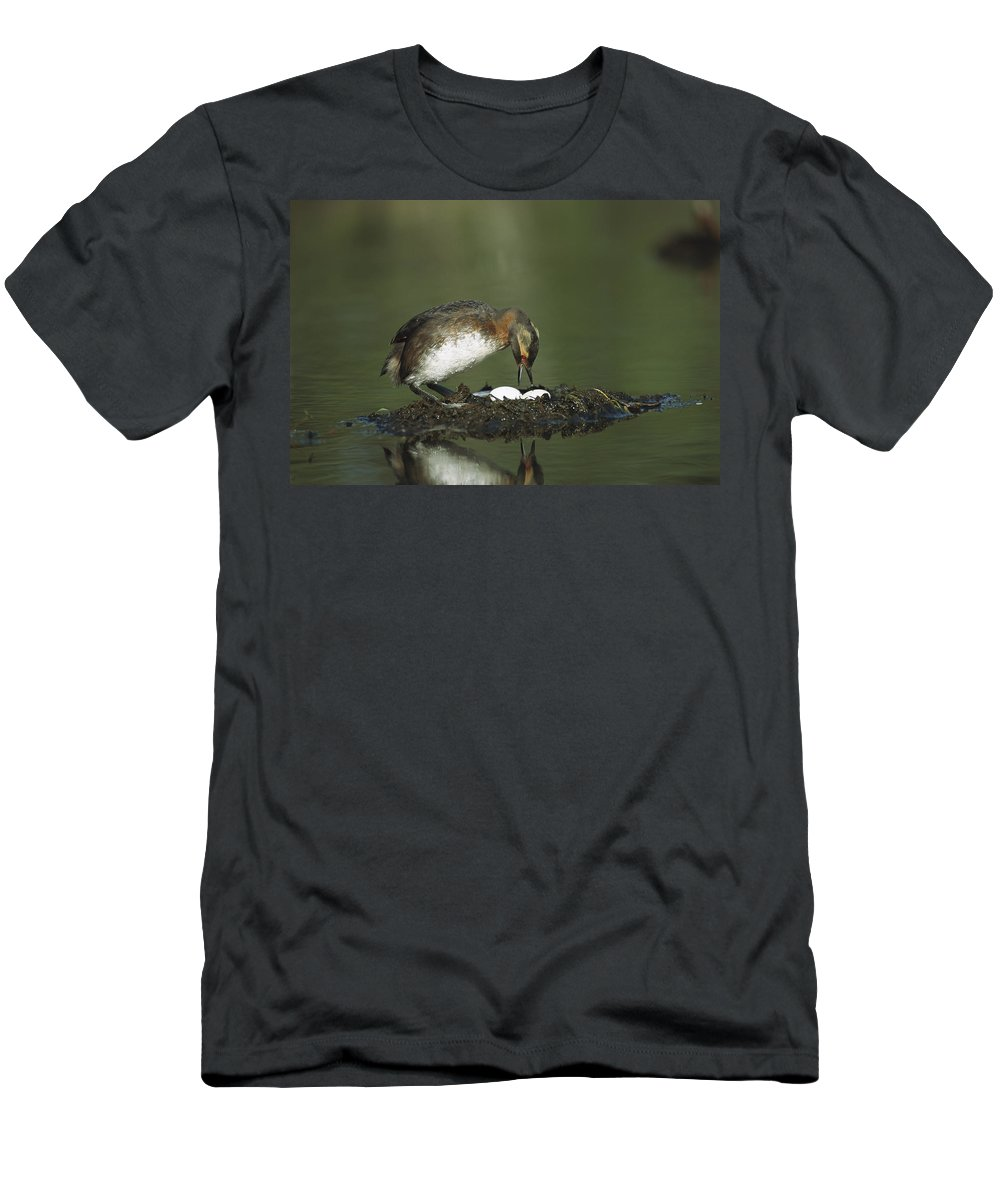 Feb0514 Men's T-Shirt (Athletic Fit) featuring the photograph Horned Grebe Adult On Floating Nest by Michael Quinton