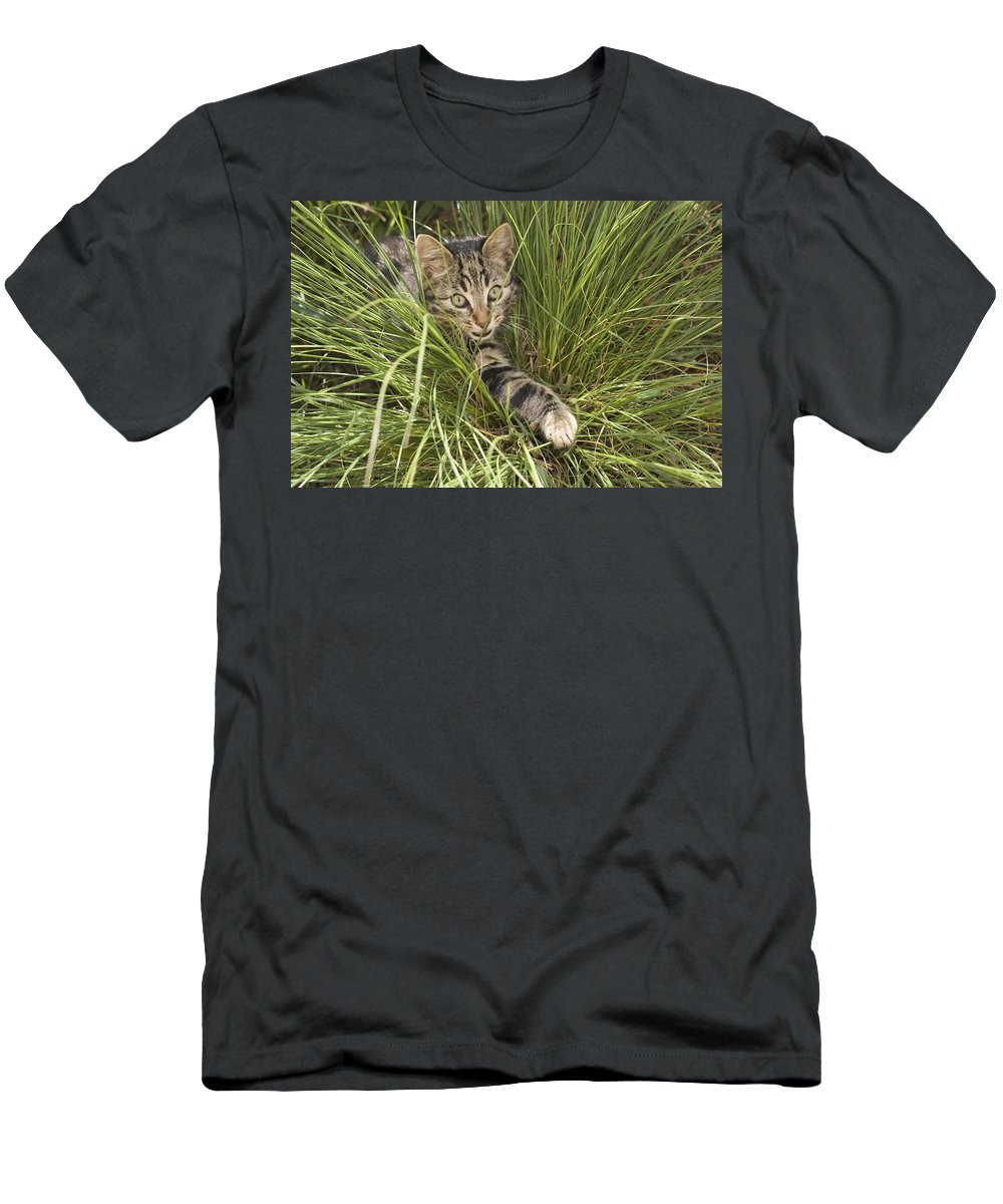Feb0514 Men's T-Shirt (Athletic Fit) featuring the photograph House Cat Hunting In Grass Germany by Konrad Wothe