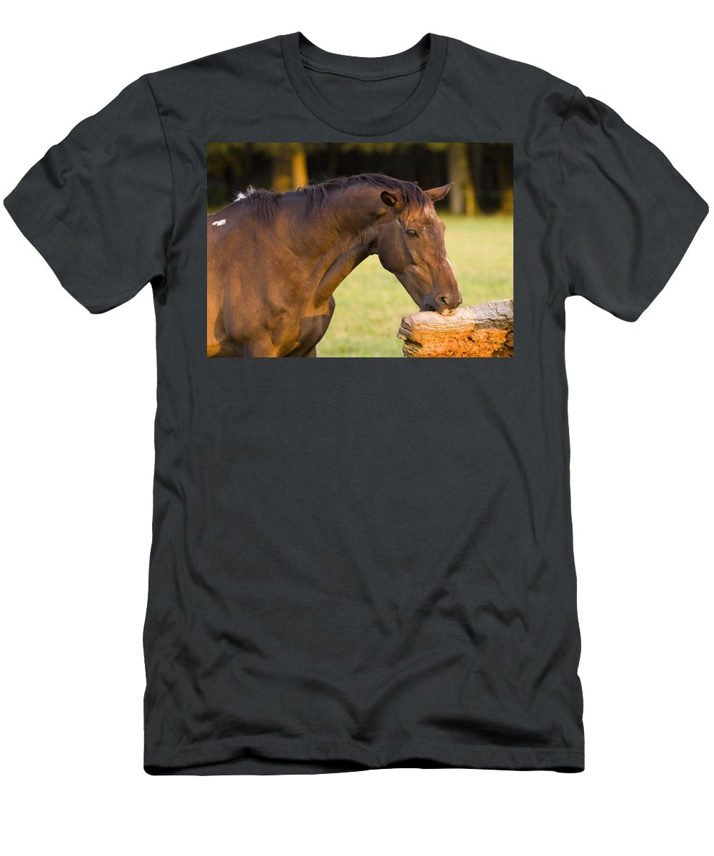 Pony Men's T-Shirt (Athletic Fit) featuring the photograph Hungry by Angel Ciesniarska