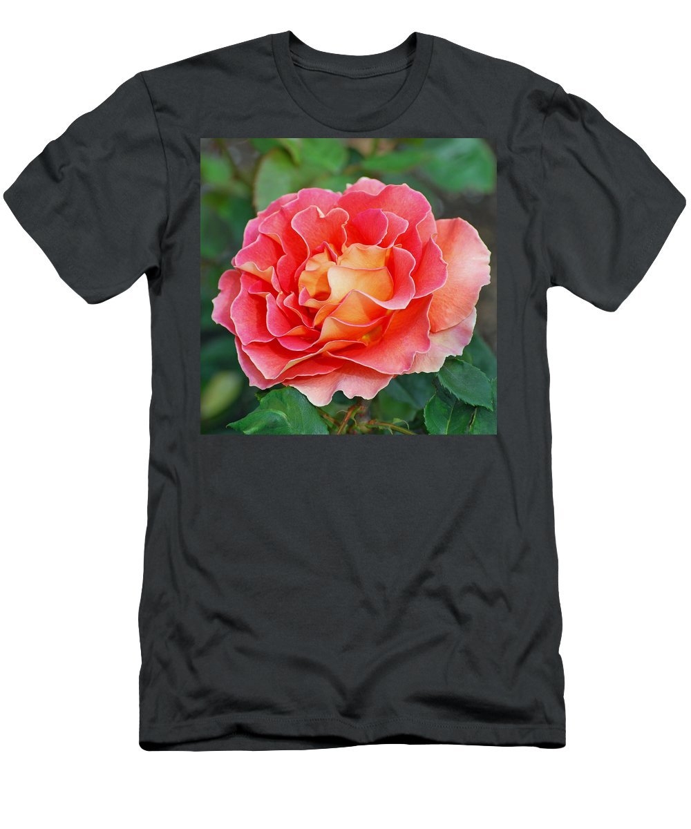 Hybrid Tea Rose Men's T-Shirt (Athletic Fit) featuring the photograph Hybrid Tea Rose by Lisa Phillips