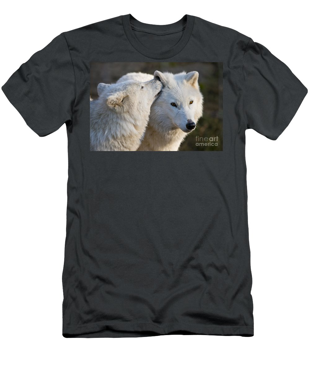 Arctic Wolf Photography Men's T-Shirt (Athletic Fit) featuring the photograph I Have A Secret by Wolves Only