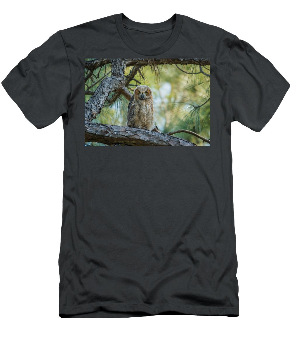 Florida Men's T-Shirt (Athletic Fit) featuring the photograph Immature Great Horned Owl by Jane Luxton