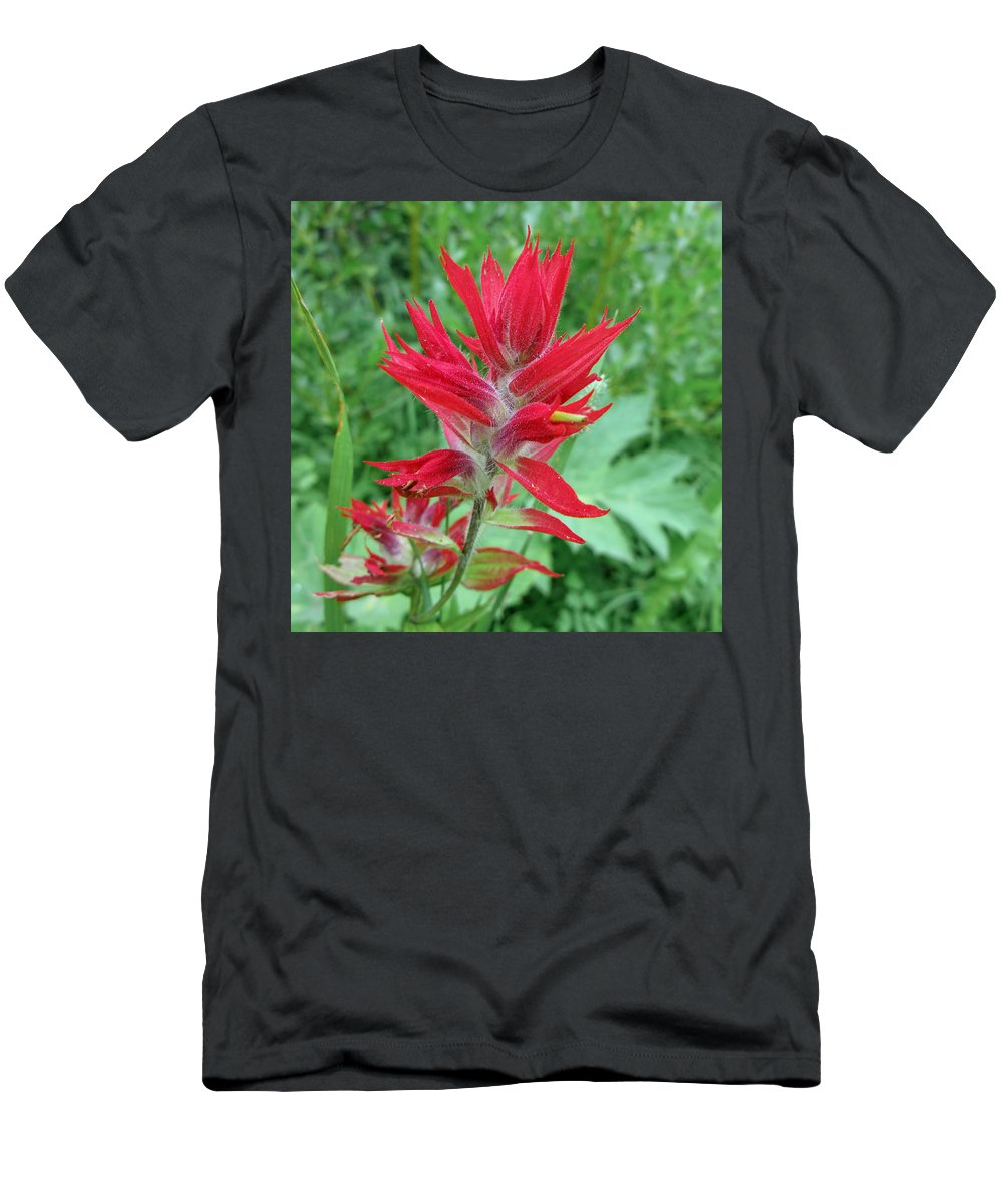 Indian Paintbrush Men's T-Shirt (Athletic Fit) featuring the photograph Indian Paintbrush by Jack Bell