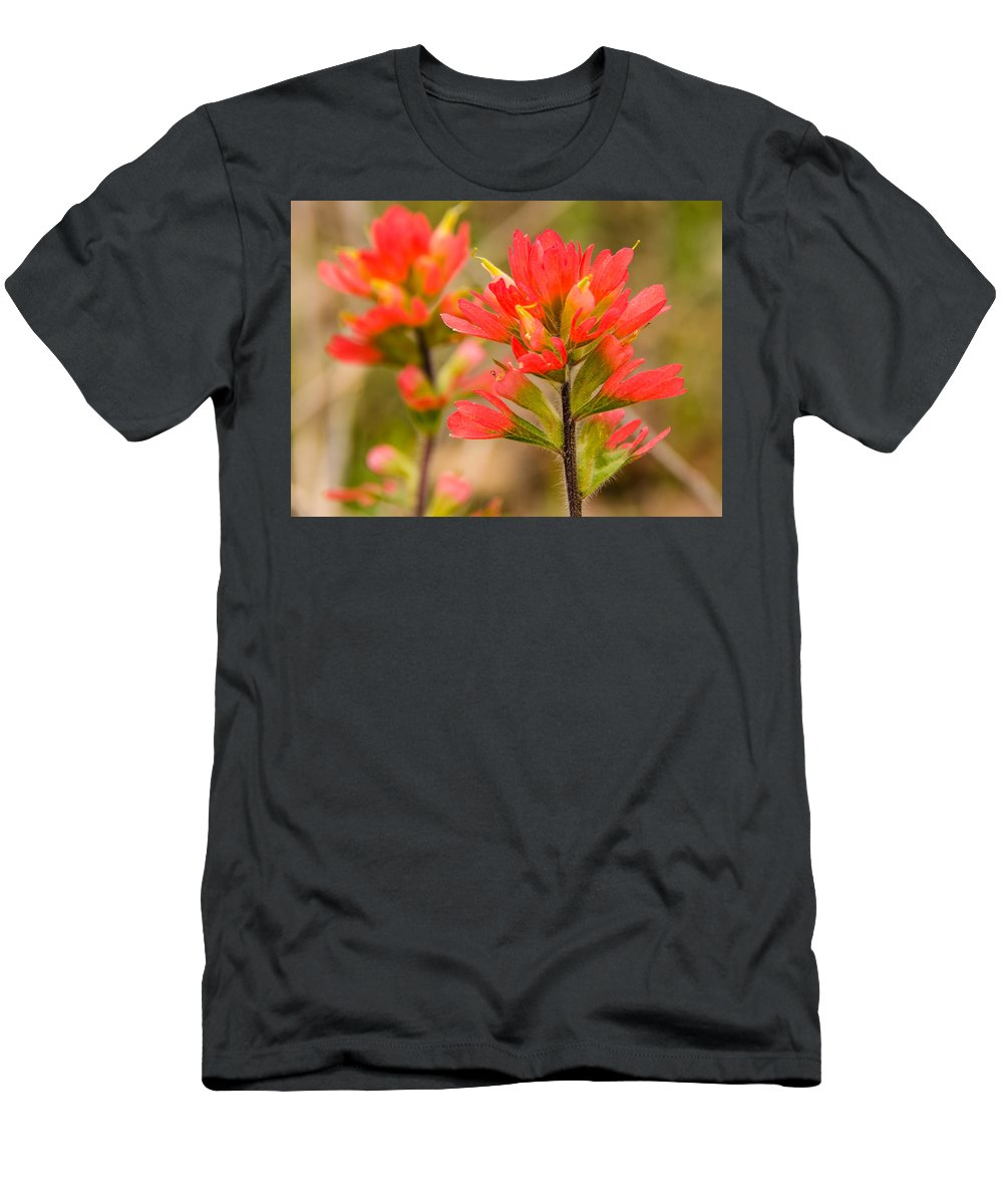 Indianpaintbrush Men's T-Shirt (Athletic Fit) featuring the photograph Indian Paintbrush by Linda Shannon Morgan