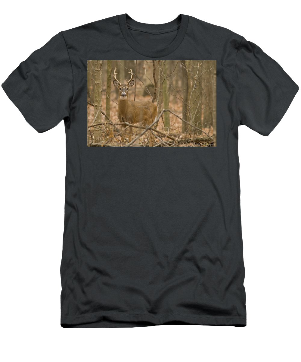 Buck Men's T-Shirt (Athletic Fit) featuring the photograph Indiana Buck by Crystal Heitzman Renskers