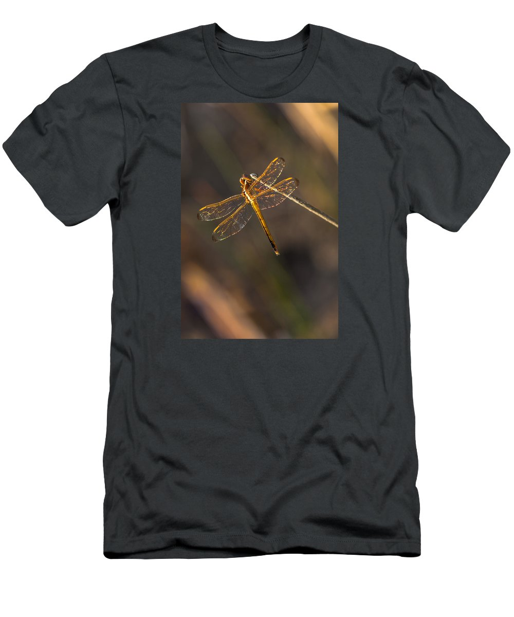Dragonfly Men's T-Shirt (Athletic Fit) featuring the photograph Iridescent Dragonfly Wings by Ed Gleichman
