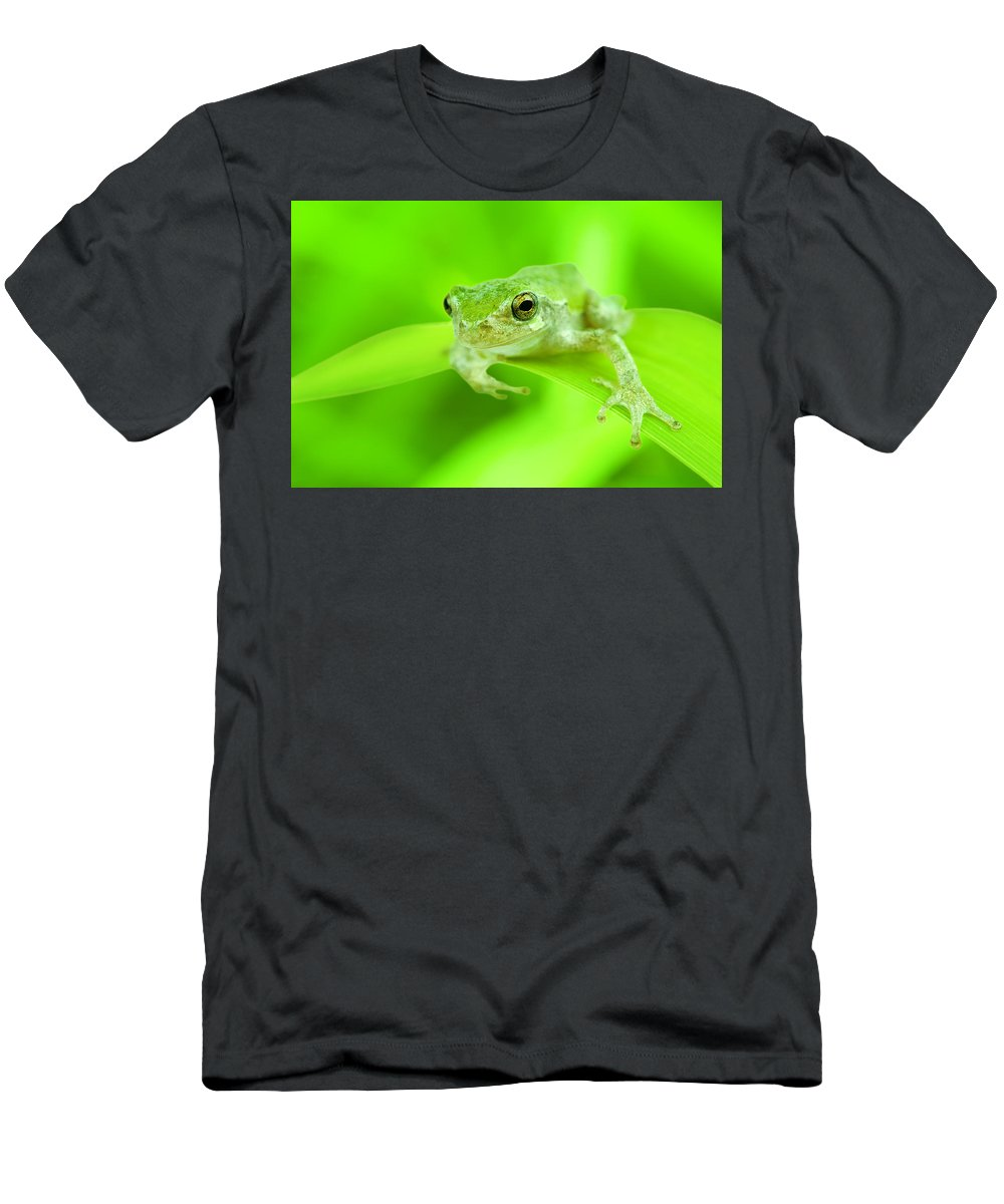Frog Men's T-Shirt (Athletic Fit) featuring the photograph It's Not Easy Being Green by Alexey Stiop