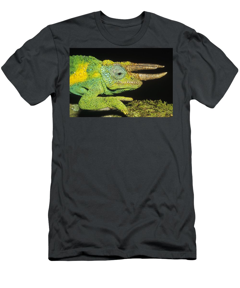 Feb0514 Men's T-Shirt (Athletic Fit) featuring the photograph Jacksons Chameleon Male East Africa by Konrad Wothe