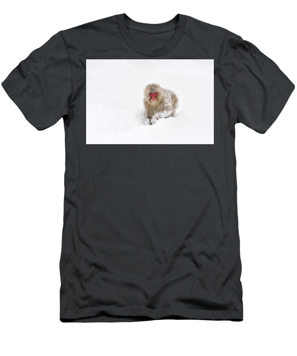 Thomas Marent Men's T-Shirt (Athletic Fit) featuring the photograph Japanese Macaque In Snow Jigokudani by Thomas Marent
