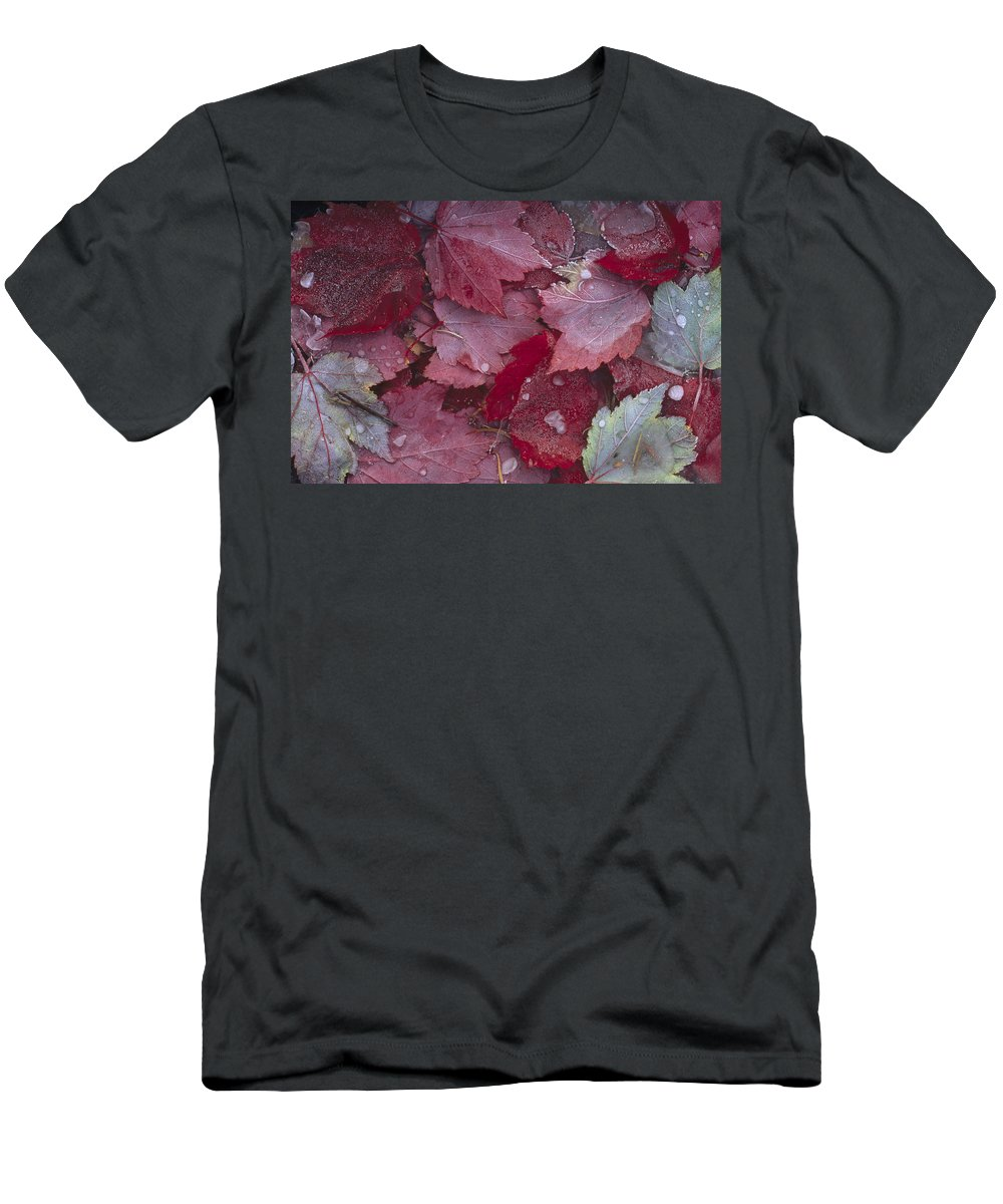 Feb0514 Men's T-Shirt (Athletic Fit) featuring the photograph Japanese Maple Leaves With Frost by Tim Fitzharris