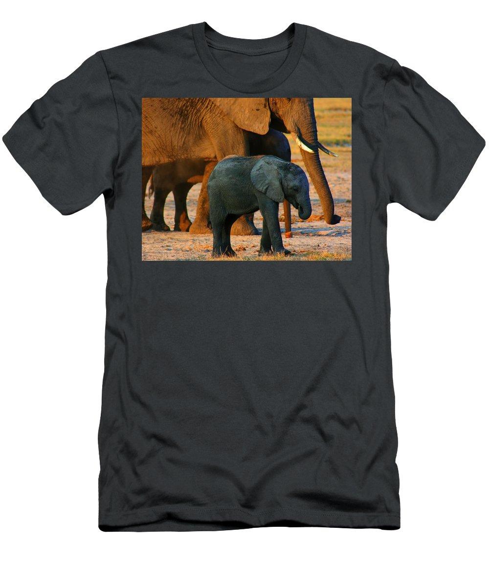 Elephants Men's T-Shirt (Athletic Fit) featuring the photograph Kalahari Elephants by Amanda Stadther
