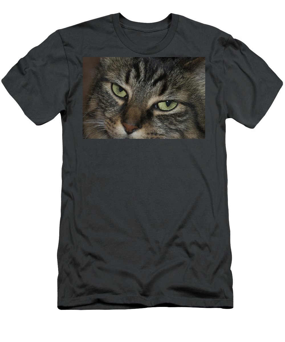 Cat Eyes Men's T-Shirt (Athletic Fit) featuring the photograph Kitty Cat Eyes by Thomas Woolworth