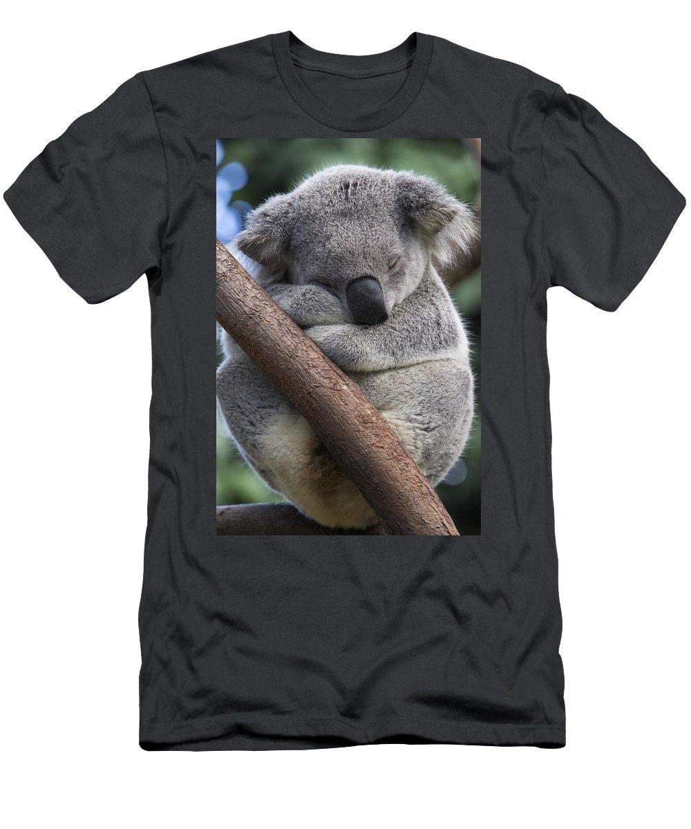 Feb0514 Men's T-Shirt (Athletic Fit) featuring the photograph Koala Male Sleeping Australia by Suzi Eszterhas