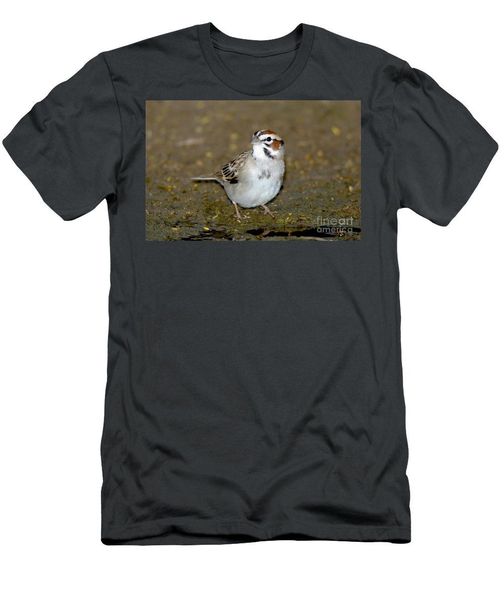 Animal Men's T-Shirt (Athletic Fit) featuring the photograph Lark Sparrow by Anthony Mercieca