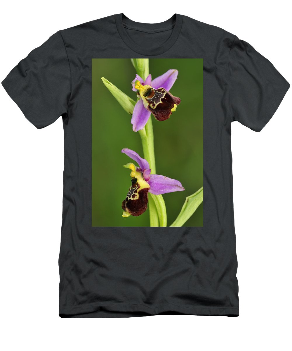 Feb0514 Men's T-Shirt (Athletic Fit) featuring the photograph Late Spider Orchid Switzerland by Thomas Marent