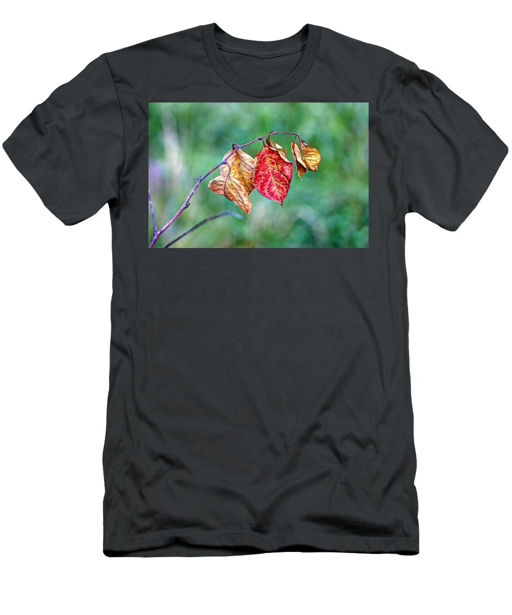 Leaf Men's T-Shirt (Athletic Fit) featuring the photograph Leaving Summer Behind by Mother Nature