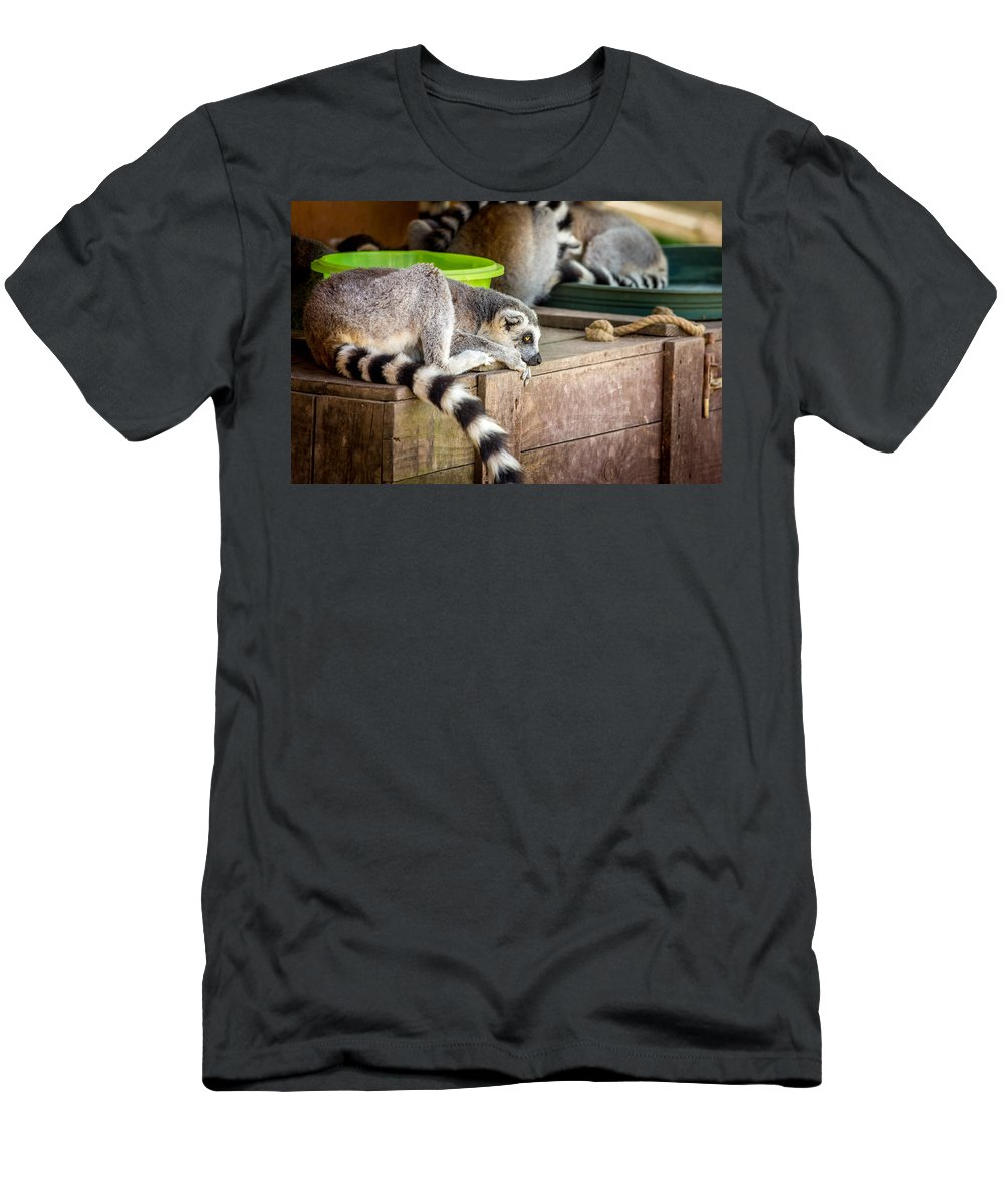 Wildlife Men's T-Shirt (Athletic Fit) featuring the photograph Lemur by Pati Photography