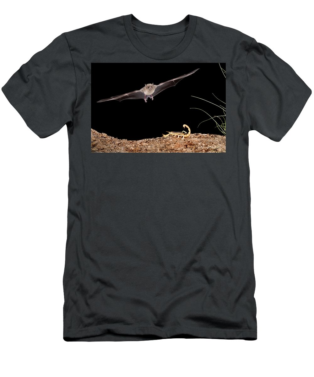 Feb0514 Men's T-Shirt (Athletic Fit) featuring the photograph Lesser Long-nosed Bat Approaching by Tom Vezo
