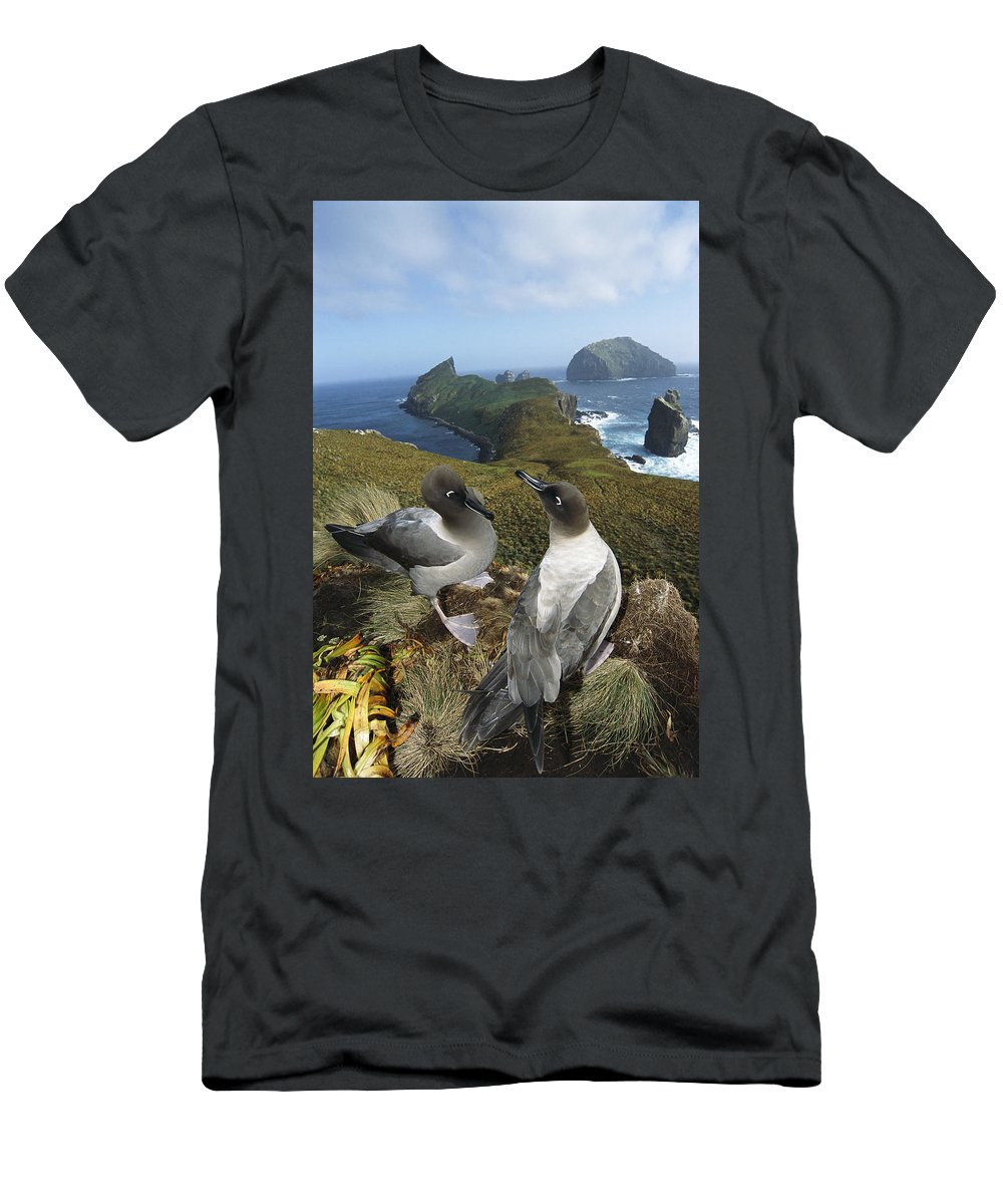 Feb0514 Men's T-Shirt (Athletic Fit) featuring the photograph Light-mantled Albatrosses Courting by Tui De Roy