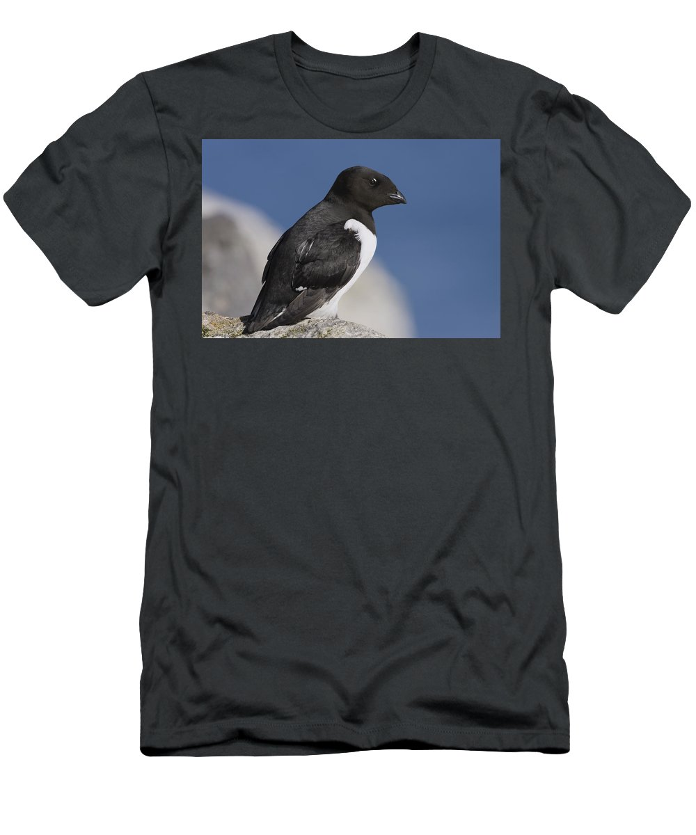 Feb0514 Men's T-Shirt (Athletic Fit) featuring the photograph Little Auk Spitsbergen Norway by Konrad Wothe