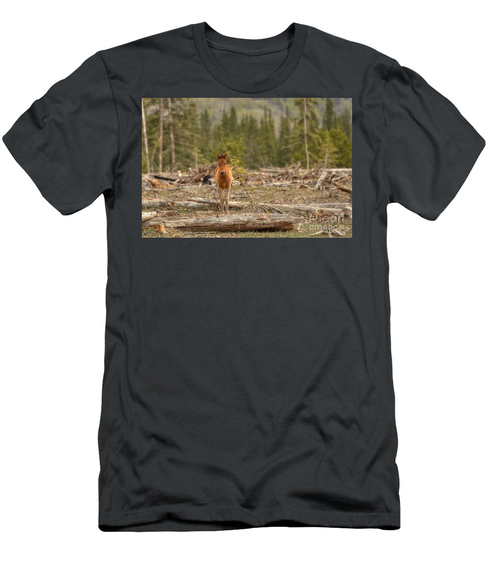 Wild Horse Men's T-Shirt (Athletic Fit) featuring the photograph Little Big Boss by James Anderson