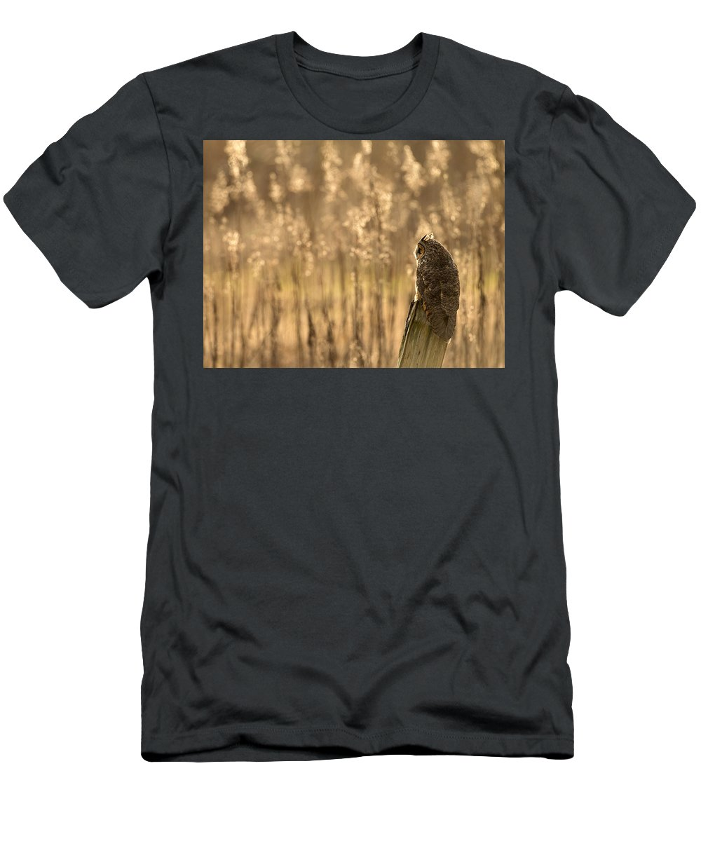 Long-eared Owl Men's T-Shirt (Athletic Fit) featuring the photograph Long-eared Owl by Max Waugh
