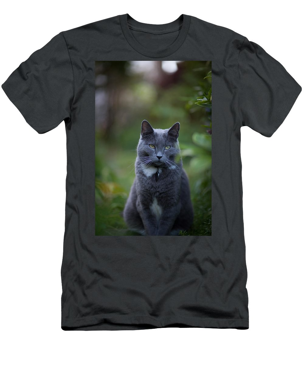 Cat Men's T-Shirt (Athletic Fit) featuring the photograph Looking Away by Mike Reid