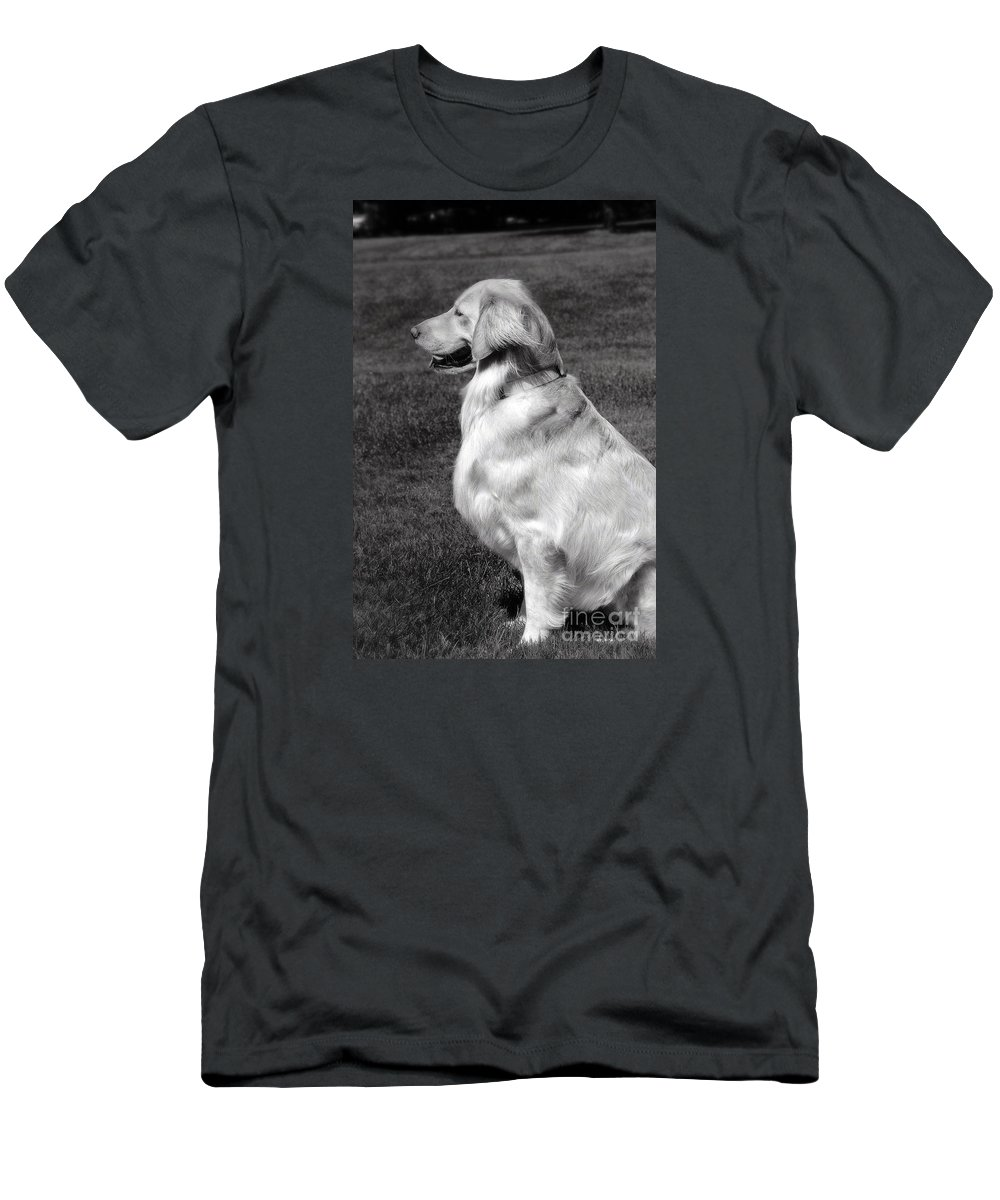 Frankjcasella T-Shirt featuring the photograph Looking Golden by Frank J Casella