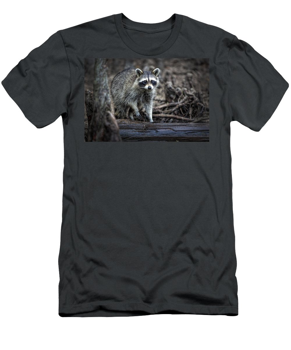 Raccoon Men's T-Shirt (Athletic Fit) featuring the photograph Louisiana Raccoon II by Diana Powell