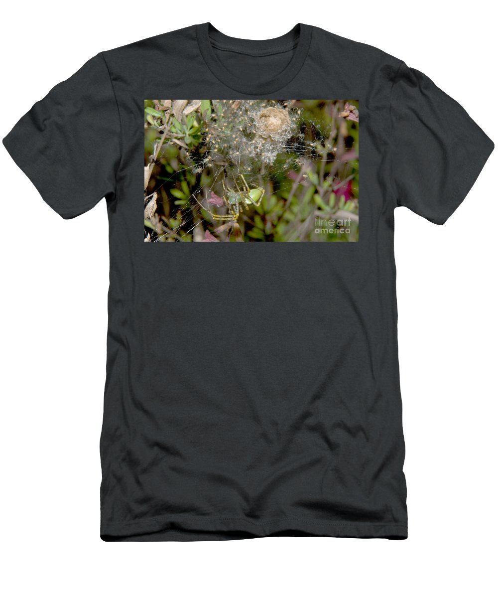 Lynx Spider Men's T-Shirt (Athletic Fit) featuring the photograph Lynx Spider And Young by Anthony Mercieca