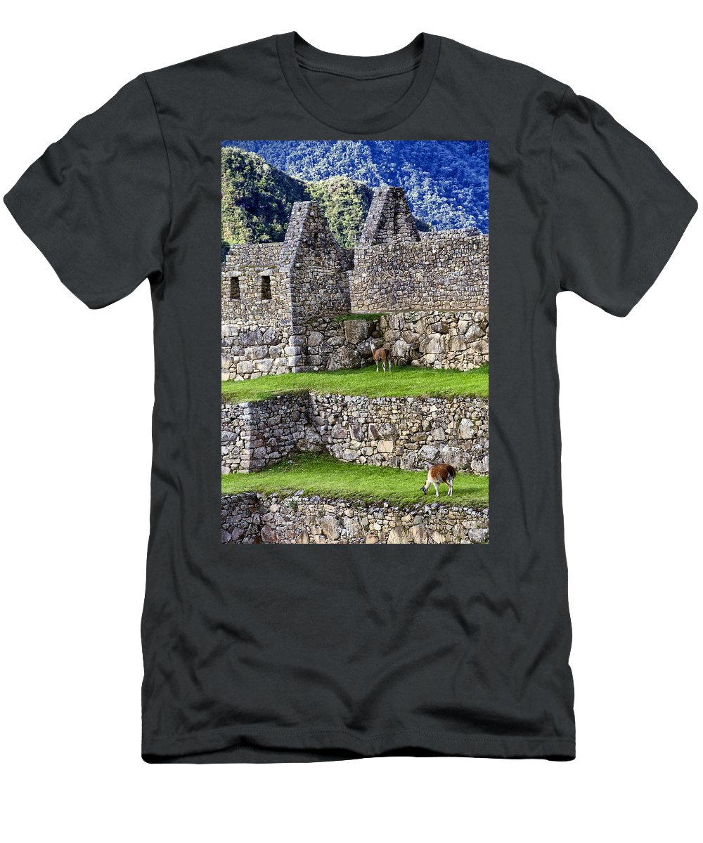 Macchu Picchu Men's T-Shirt (Athletic Fit) featuring the photograph Machu Picchu - Grazing Lamas by Jon Berghoff