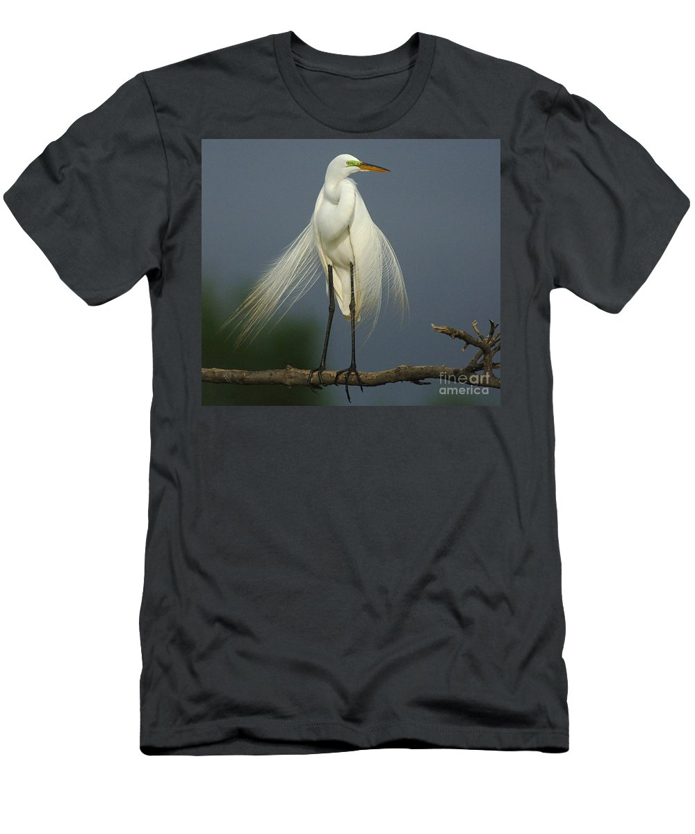 Majestic Great Egret Men's T-Shirt (Athletic Fit) featuring the photograph Majestic Great Egret by Bob Christopher