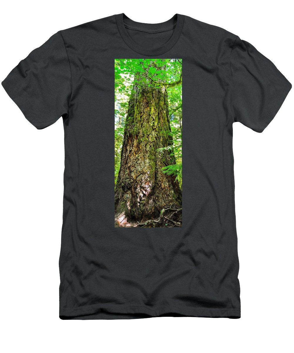 Old Growth Forest Men's T-Shirt (Athletic Fit) featuring the photograph Majestic Spirit Collection 2 by Roxy Hurtubise