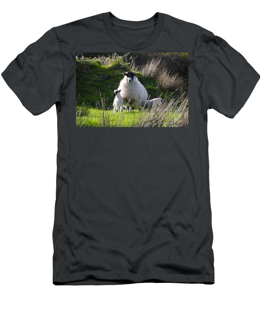 Mama Men's T-Shirt (Athletic Fit) featuring the photograph Mama Sheep And Her Two Lambs by Bill Cannon