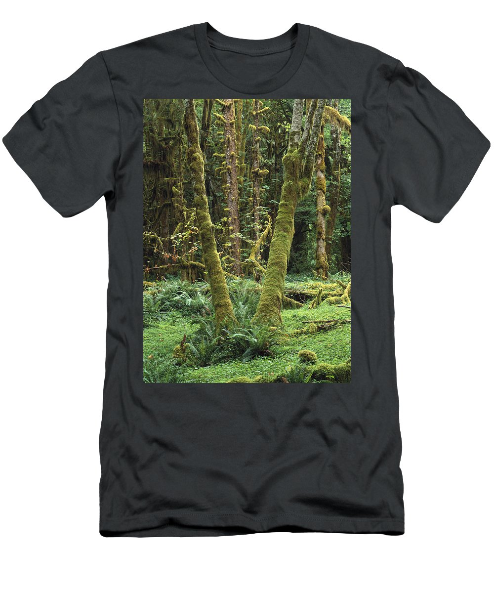 Feb0514 Men's T-Shirt (Athletic Fit) featuring the photograph Maple Glade Quinault Rain Forest by Tim Fitzharris