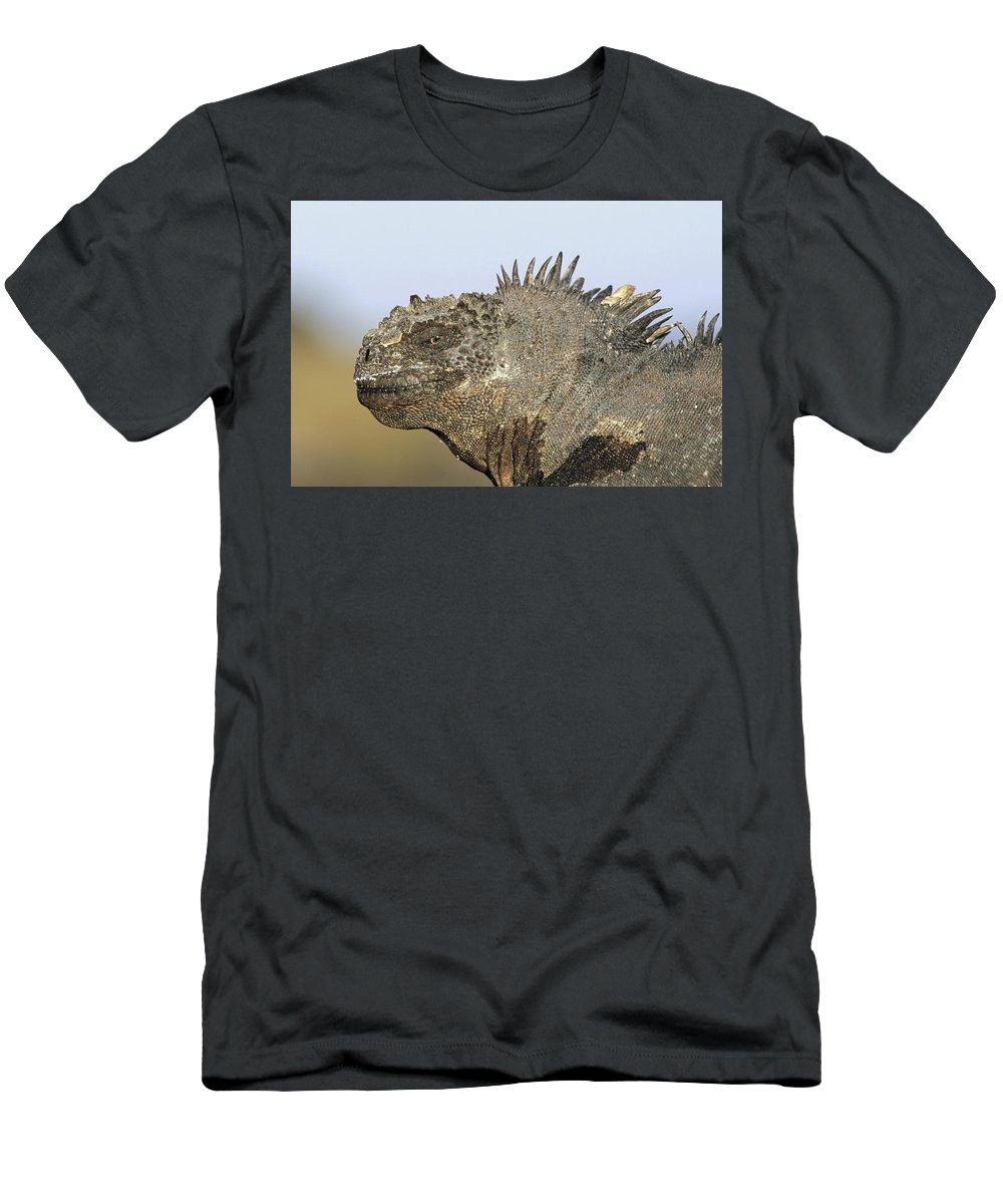 Feb0514 T-Shirt featuring the photograph Marine Iguana Male Santa Cruz Island by Tui De Roy