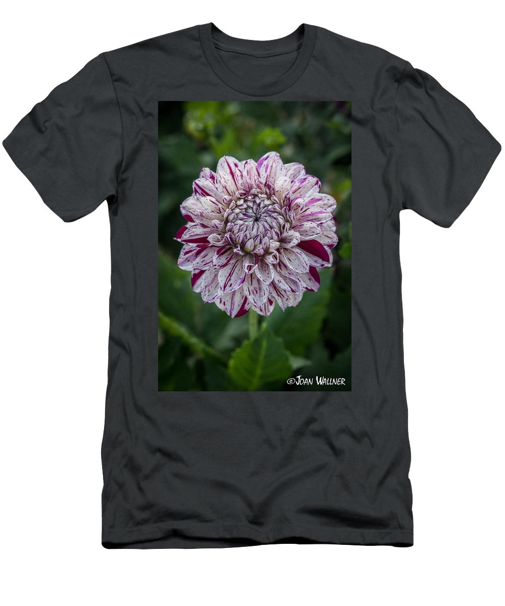 Dahlia Men's T-Shirt (Athletic Fit) featuring the photograph Maroon Speckled Dahlia by Joan Wallner