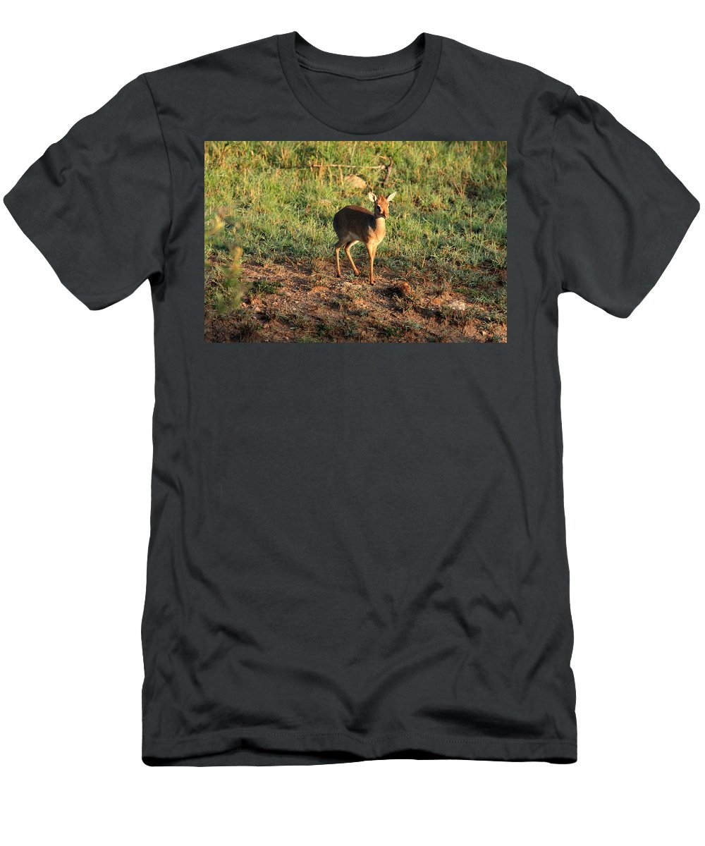 Africa Men's T-Shirt (Athletic Fit) featuring the photograph Masai Mara Dikdik Deer by Aidan Moran