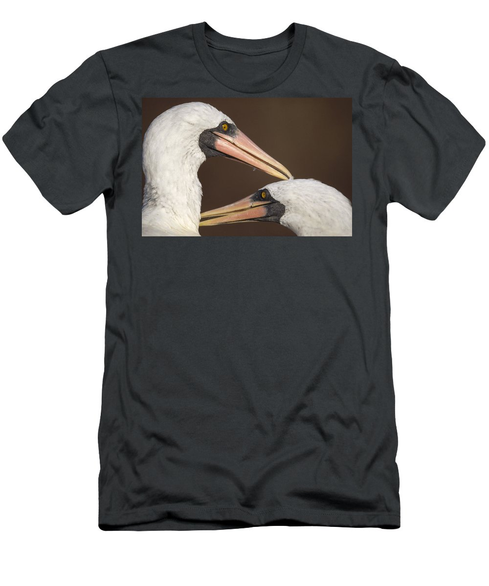 Feb0514 Men's T-Shirt (Athletic Fit) featuring the photograph Masked Booby Couple Allopreening by Tui De Roy