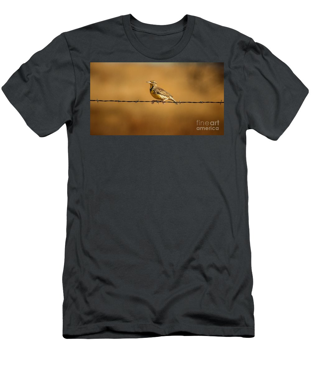 Wildlife Men's T-Shirt (Athletic Fit) featuring the photograph Meadowlark And Barbed Wire by Robert Frederick