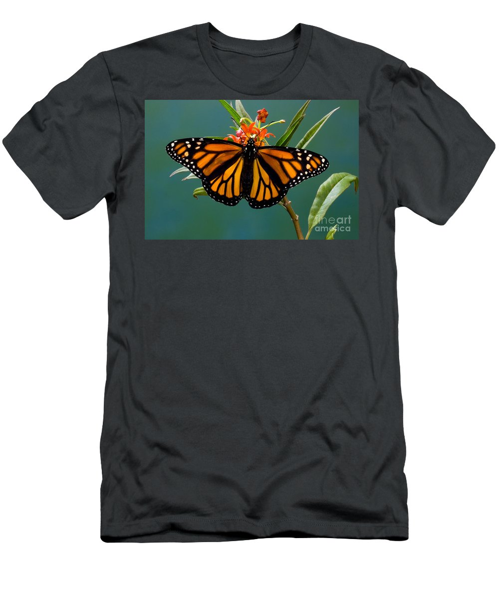 Animal Men's T-Shirt (Athletic Fit) featuring the photograph Monarch Butterfly Danaus Plexippus by Anthony Mercieca