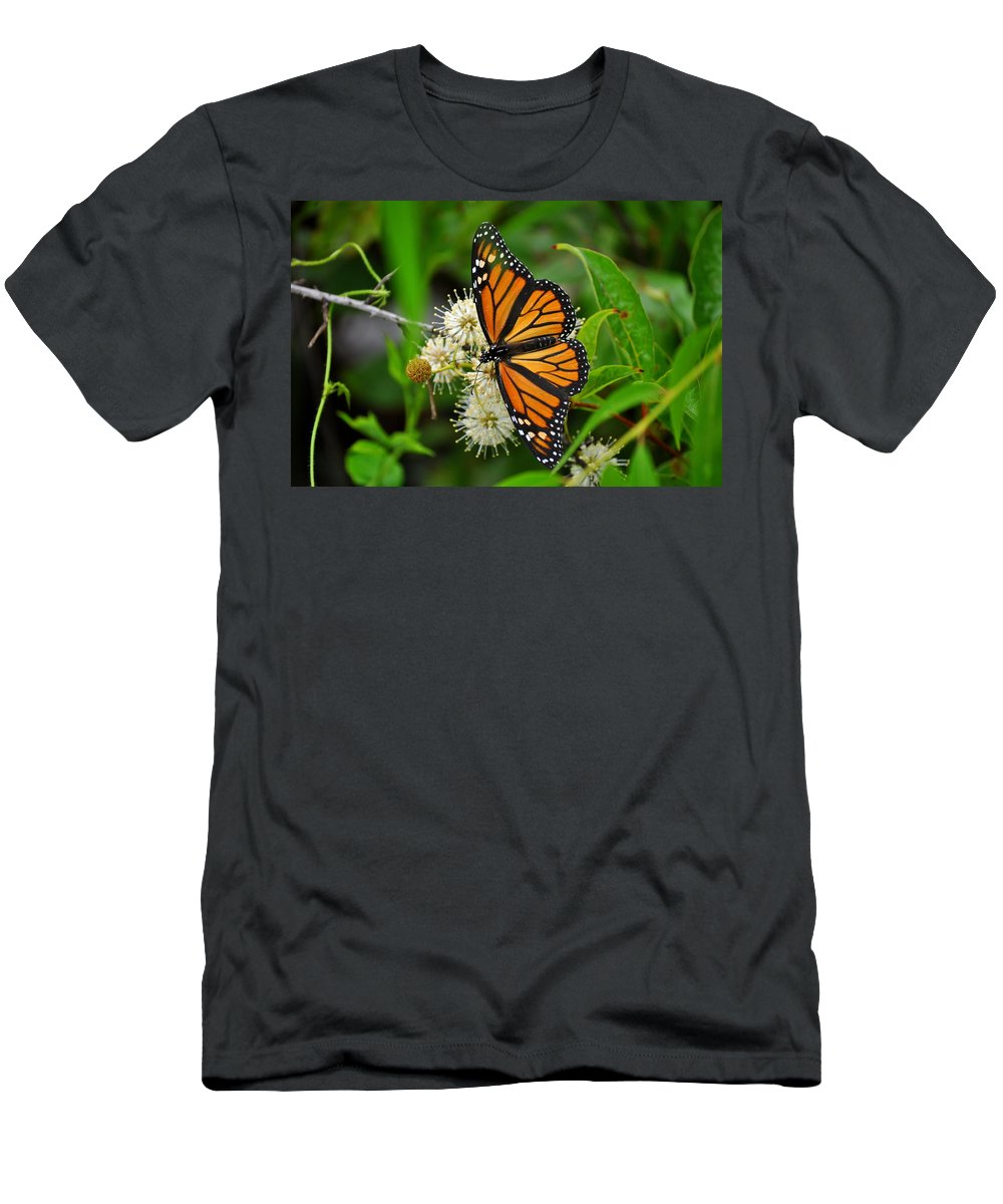 Monarch Butterfly Men's T-Shirt (Athletic Fit) featuring the photograph Monarch Butterfly by Stacy Abbott