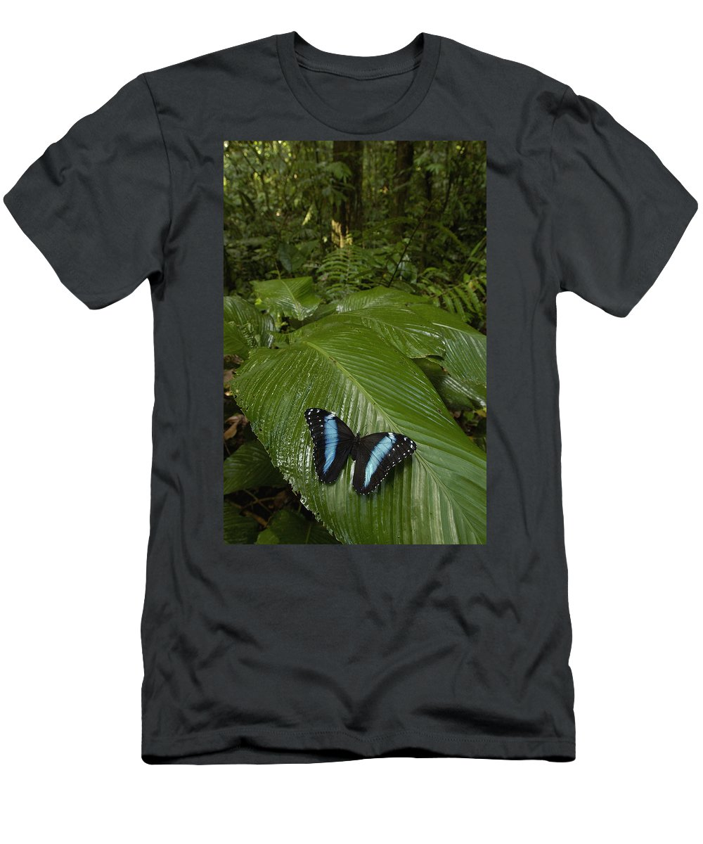 Feb0514 Men's T-Shirt (Athletic Fit) featuring the photograph Morpho Butterfly In Rainforest Ecuador by Pete Oxford
