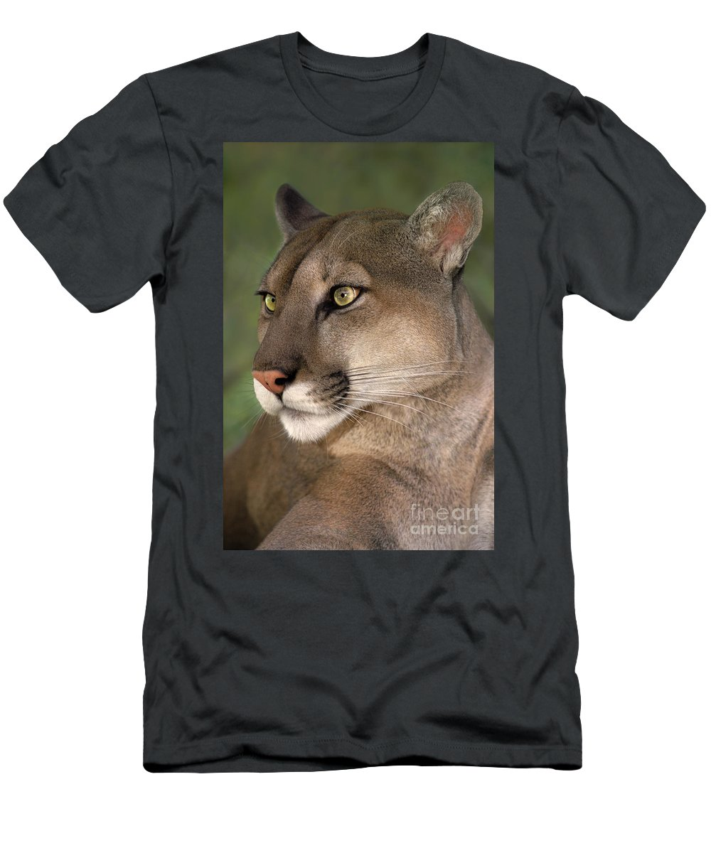Mountain Lion Men's T-Shirt (Athletic Fit) featuring the photograph Mountain Lion Portrait Wildlife Rescue by Dave Welling