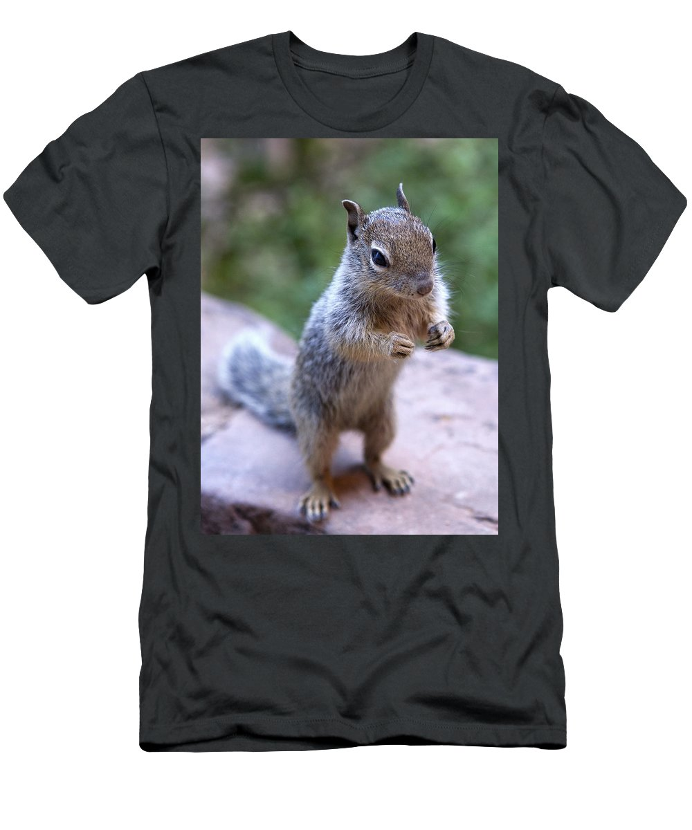 Mountain Men's T-Shirt (Athletic Fit) featuring the photograph Mountain Squirrel 2 by Marilyn Hunt